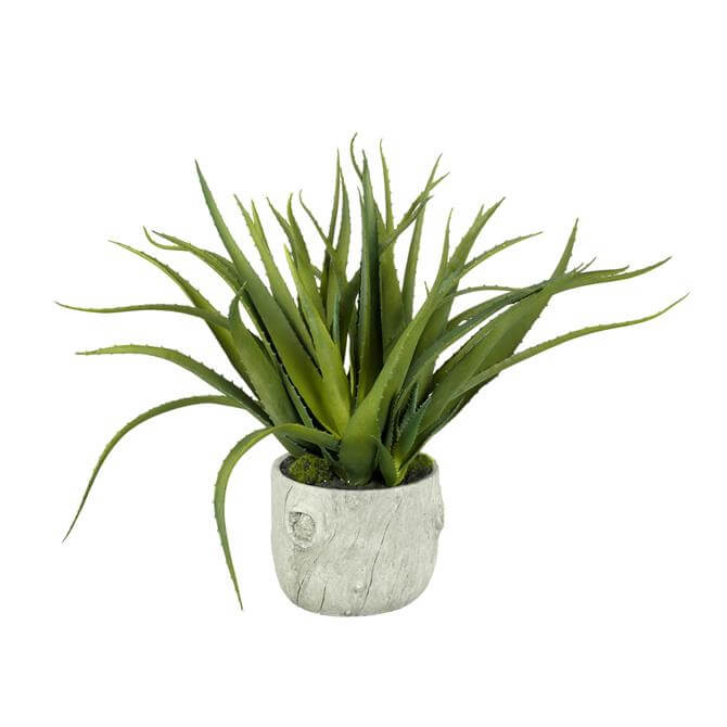 Parlane Aloe X5 Potted Cement Green