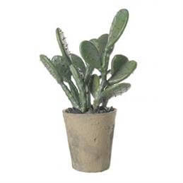 Parlane Prickly Potted Pear Cactus